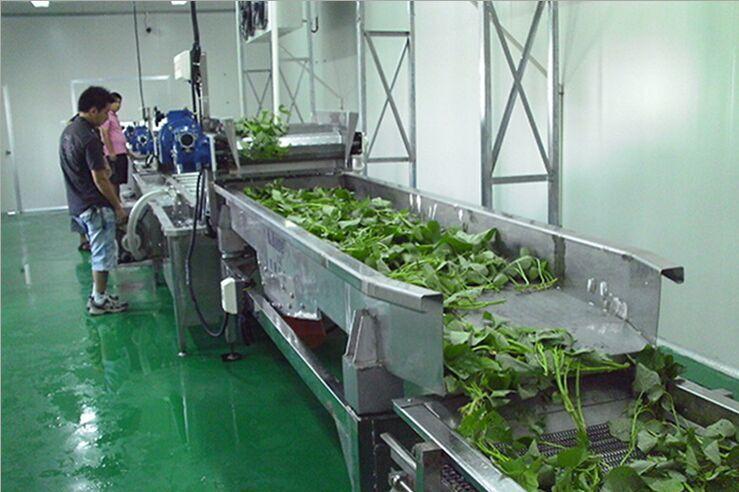 蔬菜清洗流水线